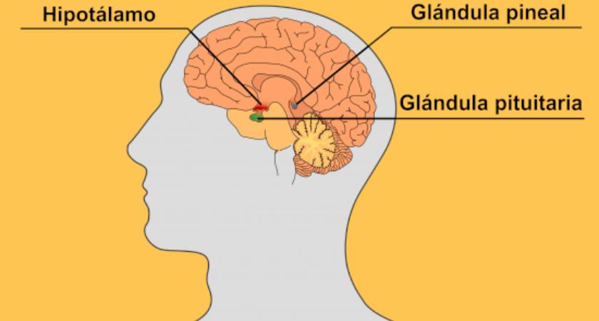 hormona de melatonina induce al sueño